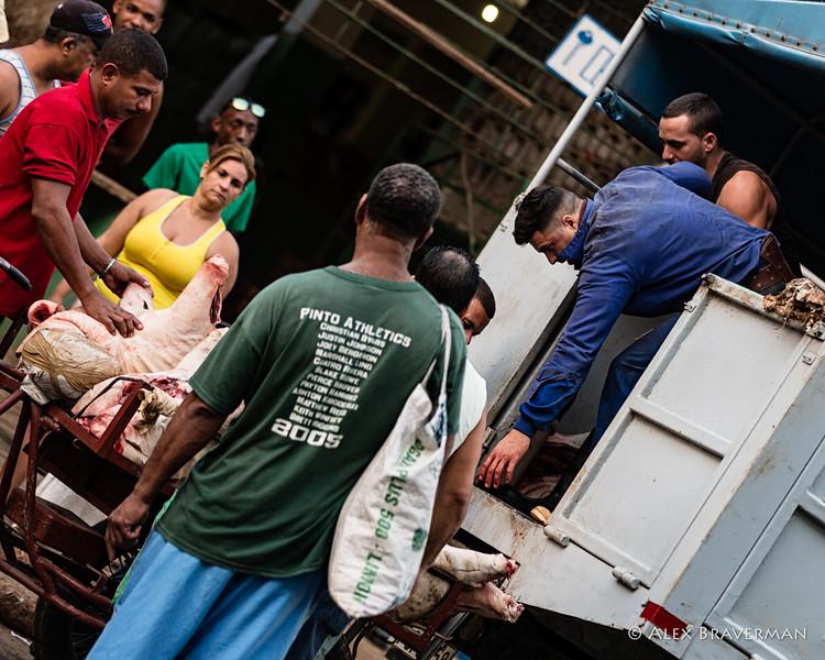unloading pigs #190
