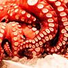 octopus #627