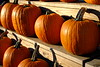 Pumpkin Time at Szalay's Farm and Market, Cuyahoga Valley National Park
