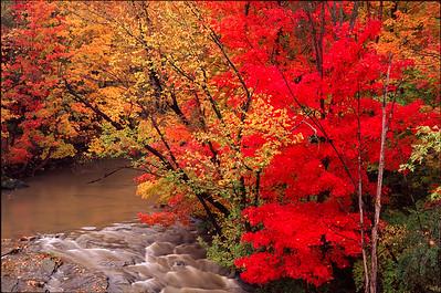 Fall Color, Brandywine Creek