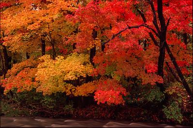 Fall Color, Tinker's Creek, Bedford Reservation