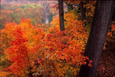 Fall Color, Tinker's Creek Gorge, Bedford Reservation