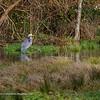 Heron Hangout
