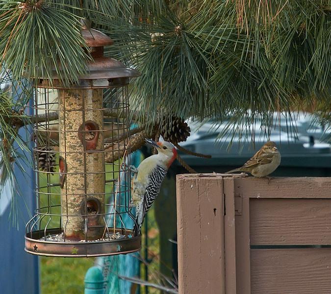 birdy-friends-jan-2013
