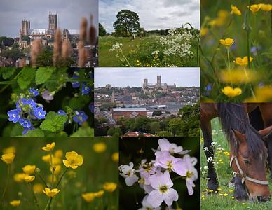25.05.15 - South Common (2)  Another collage from my guided photo walk on Lincoln South Common on Saturday I'm afraid. Yesterday was a busy day and was one of those rare times when life got in the way of photography!