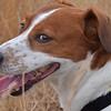 03.08.15 - Happy Dog<br /> <br /> Mr Willis yesterday