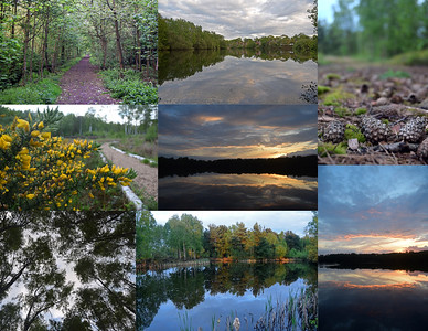 08.05.15 - Swanholme Lakes (2)  Another collage from my guided photo walk on Thursday evening