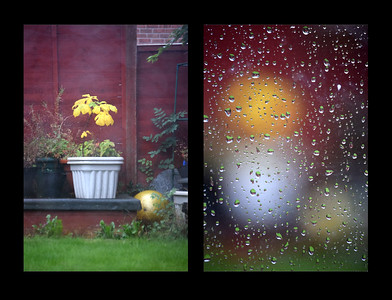 12.09.15 - Focus?  This is a bit of fun with focal points, what do you prefer, the rather uninteresting tubs at the bottom of the garden or the raindrops on the conservatory window? The shot is basically the same apart from the point of focus, or as similar as I could get it hand held. I love playing around with the abstract effects created by the out of focus backgrounds in shots like this. I took about a dozen shots of the rain on the window, and they were all very different depending on what was in the background.  A couple of people spotted some odd patterning in the sky on my Daily yesterday, and they were right. Unfortunately I had processed it on a friend's old laptop and didn't notice it. It came about because I was trying to get some definition into a featureless grey misty background and processed it a bit too far. It just shows how much the definition varies from screen to screen, I've been caught out by this a couple of times before.