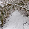 """21.01.13 - Narnia!<br /> <br /> Fresh snow means more fun, for man and dog, you can just see Mr Willis running ahead in this magical tunnel. This is the long distant footpath known as """"The Viking Way"""", which snakes through several Eastern Counties in England, including a long stretch through Lincolnshire. I use it as a regular running route from home, and I was out here running earlier in the morning, what a magical place. <br /> <br /> As Art Hill pointed out yesterday, it is ironic that the UK has a lot more snow than many parts of the US this winter, but I'm not complaining, I love it :)"""
