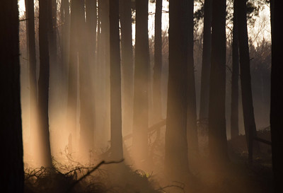 20.01.17 - Magical Light at Oslters Plantation