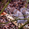 08.02.14 - Little Fella<br /> <br /> Nothing new from yesterday, so this little squirrel is from Friday.<br /> <br /> Just a footnote on my muddy running shoes from yesterday. Some people thought I should buy a new pair, but those are a new pair, just very muddy :)