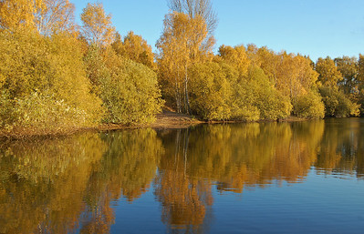 14.11.13 - Gold and Blue  The autumn colours are breath taking in Swanholme Lakes nature reserve at the moment.