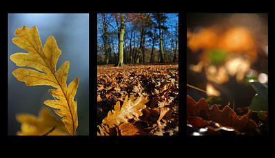 11.12.13 - Leaf Triptych  Three different ways to look at leaves,