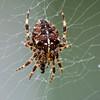 25.09.17 - Spider