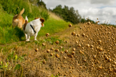 11.09.17 - Dogs and Linseed