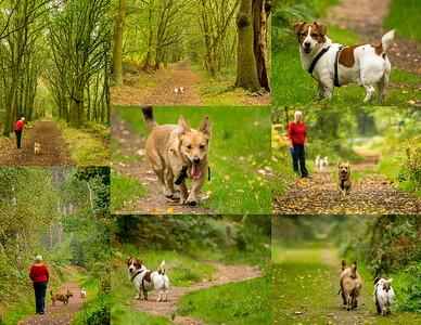 27.09.17 - Sherwood Forest