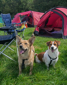 01.09.17 - Camping Dogs