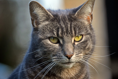 16.03.17 - Pussycat