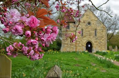 10.04.17 - Cherry Blossom