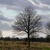 22.01.18 - Winter Trees