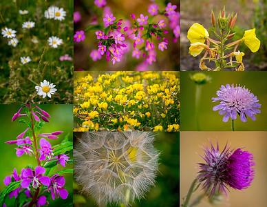 27.06.17 - Quarry Wildflowers