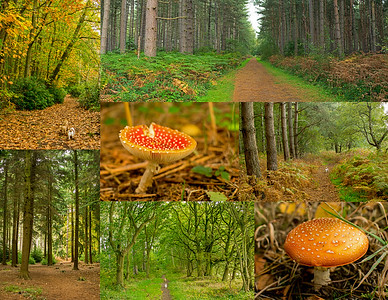 08.10.17 - Stapleford Woods