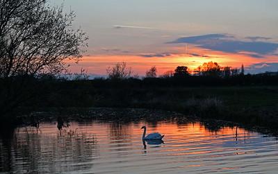 02.04.17 - Sunset Swan