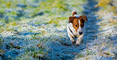 07.01.18 - Frosty Dog