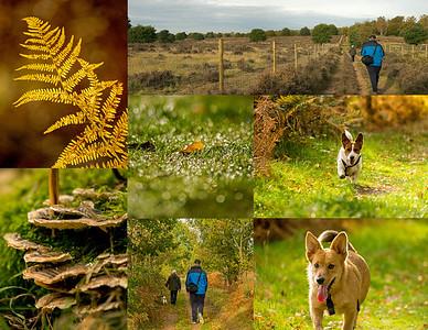 01.11.17 - Sherwood Forest