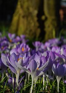 04.03.17 - Spring