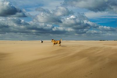 03.10.17 - Windswept Dogs