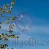 bubbles_1056