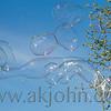 bubbles_1036