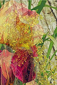 Rainforest Iris