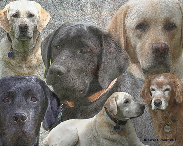 Walther dogs - Privately Owned -- NOT FOR SALE