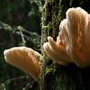 01-13-10 Muir Woods - Fungus-1