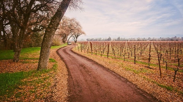 Kiser Vineyard in Winter
