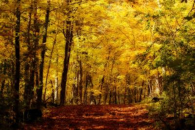 Carver Park Reserve trail