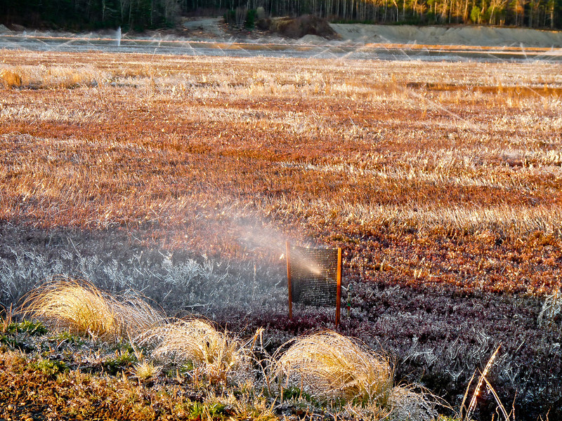 """Unimpressive, to say the least? This is the shaded """"canvas"""" for the cranberry bog droplet shots. The light changed a lot in a half hour. Those clumps of grass in the foreground are all iced over, as is everything else in the scene. It was tricky lining up the shots as I really had to keep my eye on the circulating overheads. They had a way of sneaking up on me. This was shot when I first got there and the bog edge was still in shade. I went off and shot the old peach barn for a while and when I was leaving, I thought I'd take a look at it again. The sun, droplets and background were all able to be lined up nicely. I just had to time it properly and lay on the cold, wet ground to do it! The things we do to get the shot!!<br /> Back to the dailies. <a href=""""http://hocusfocusd70.smugmug.com/Other/Dailies/7669174_PkBp2Z#!i=1779177326&k=knLPZm6"""">http://hocusfocusd70.smugmug.com/Other/Dailies/7669174_PkBp2Z#!i=1779177326&k=knLPZm6</a>"""