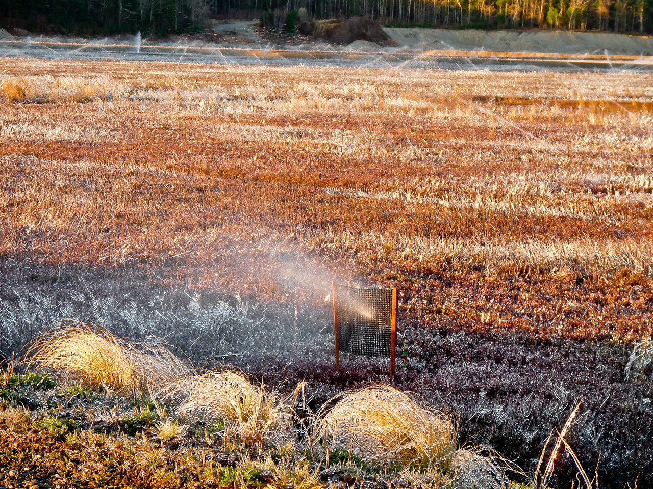 "Unimpressive, to say the least? This is the shaded ""canvas"" for the cranberry bog droplet shots. The light changed a lot in a half hour. Those clumps of grass in the foreground are all iced over, as is everything else in the scene. It was tricky lining up the shots as I really had to keep my eye on the circulating overheads. They had a way of sneaking up on me. This was shot when I first got there and the bog edge was still in shade. I went off and shot the old peach barn for a while and when I was leaving, I thought I'd take a look at it again. The sun, droplets and background were all able to be lined up nicely. I just had to time it properly and lay on the cold, wet ground to do it! The things we do to get the shot!!<br /> Back to the dailies. <a href=""http://hocusfocusd70.smugmug.com/Other/Dailies/7669174_PkBp2Z#!i=1779177326&k=knLPZm6"">http://hocusfocusd70.smugmug.com/Other/Dailies/7669174_PkBp2Z#!i=1779177326&k=knLPZm6</a>"