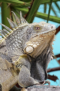 July 8.  Iguana basking in the sun.  Lots of these critters everywhere while in Bonaire.