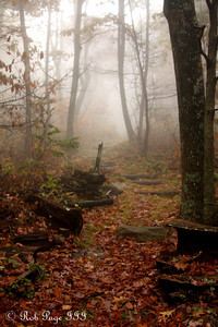Daily photo for October 26, 2009 (View the image in its  original gallery)  Follow the foggy trail and it will lead to my wife ... somewhere ahead of me. - Shenandoah NP, VA ... October 17, 2009 ... Photo by Rob Page III