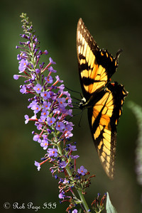 Daily favorite for August 25, 2011  A butterfly - Asheville, NC ... August 7, 2011 ... Photo by Rob Page III