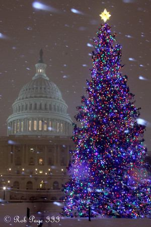 """Daily photo for January 4, 2010 (View the image in its <a href=""""http://rob-page-iii.smugmug.com/Washington-DC/Winter-2010/Christmas-in-DC-at-night/10762069_doyBc#757146444_K3jPN""""> original gallery</a>)  The Capitol Christmas Tree in the 2009 DC snowstorm - Washington, DC ... December 19, 2009 ... Photo by Rob Page III"""