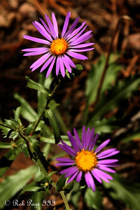 Daily Photo for October 6, 2011  Wildflowers - Colorado ... September 4, 2011 ... Photo by Rob Page III