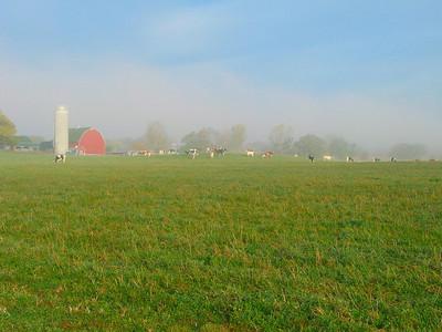 Farm - Pingree Grove, Illinois