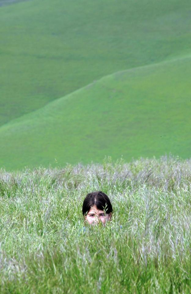 Crouching tigress in the grass. Los Vaqueros Regional Park near Livermore, California.