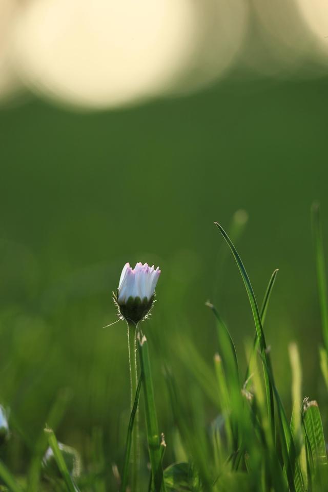Birth of a flower.