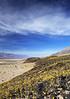 Desert Abloom