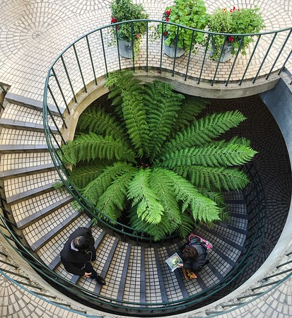 Spiral Stairs with Foliage